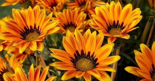 beautiful-flowers-1853562_640